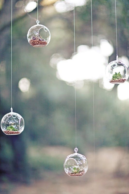 hanging terrariumsGreen Thumb, Hanging Candles, Canning Jars, Hanging Plants, Hanging Lights Bulbs, Wedding Ideas, Minis Gardens, Trees Branches, Succulents Wedding