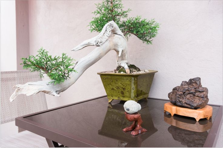 Con el ánimo conservar viva la memoria del patio que vio pasar la vida su familia, Antonio Díez conservó los durazneros de este sitio mediante una técnica de reproducción vegetativa, de común uso en el cultivo de bonsai. FLORA ars+natura   Antonio Díez: Jardín errante