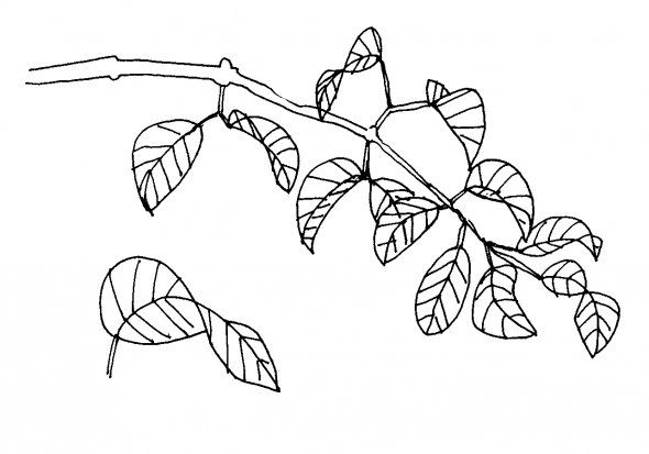how to draw a tree without leaves easy