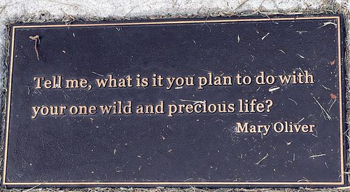 Plaque: Tell me, what is it you plan to do with your one wild and precious life? Mary Oliver quote