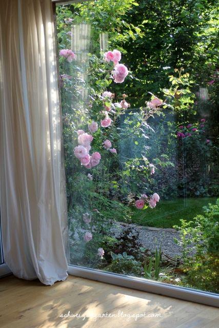 Eine Kletterrose im Wohnzimmer - Ein Schweizer Garten