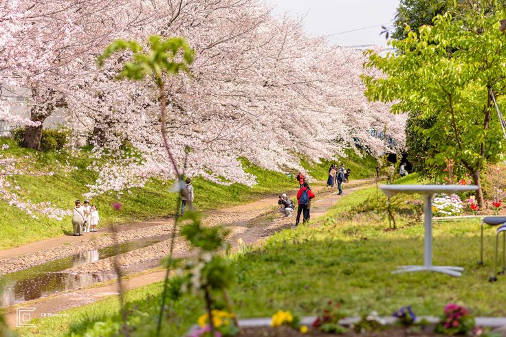 The Best Place For Sakura Photos In The Spring Of 2020 In Japan Photographer In Tokyo Metropolitan Area