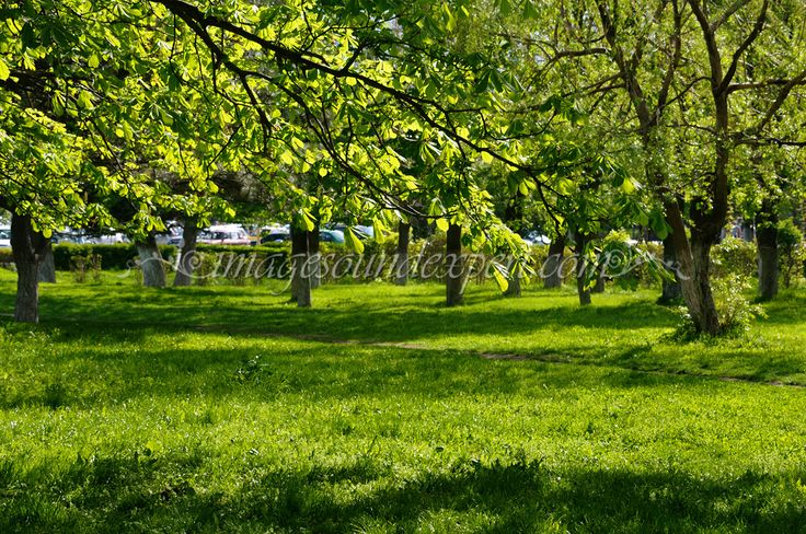 background spring green lights shadows