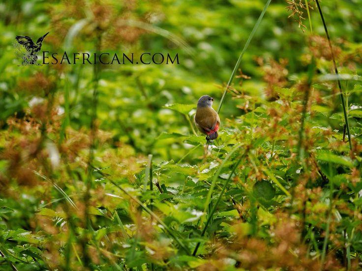 A bird on Zomba Plateau