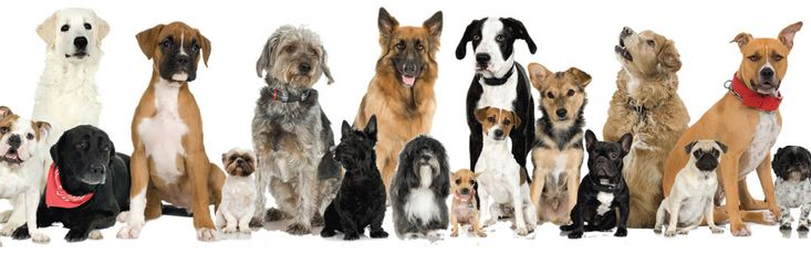 Want a purebred? Adopt it!!  dog-site.net: Essential Oil, Animals, Shelter Dogs, Cat, Dog Oiler, Pets, Animal Photos