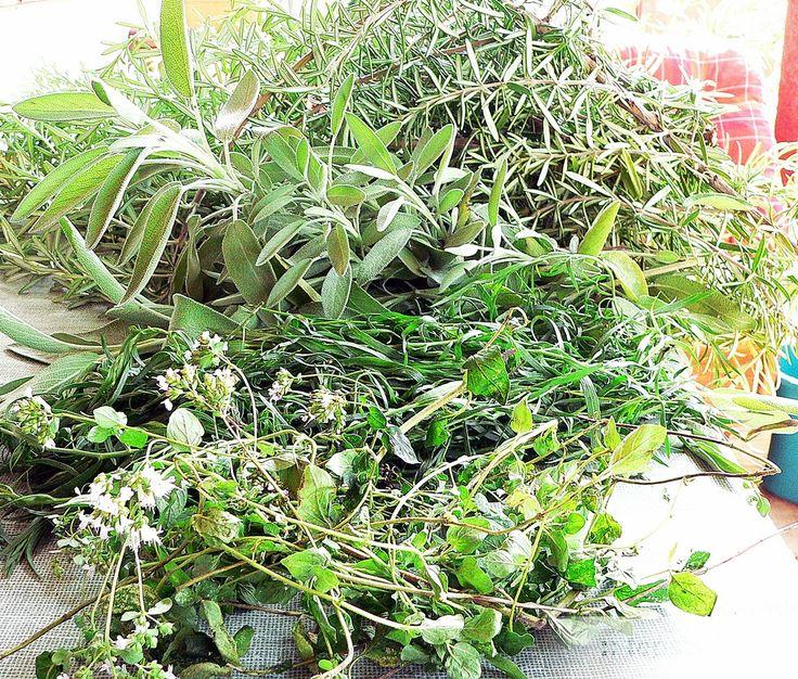 Hogyan tartósítsuk a fűszernövényt?