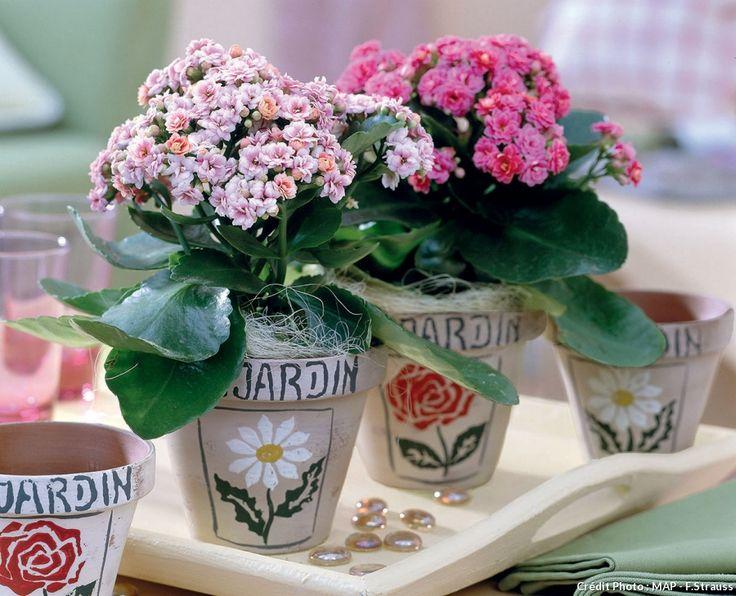Les 240 meilleures images du tableau plantes d 39 int rieur for Soigner amaryllis