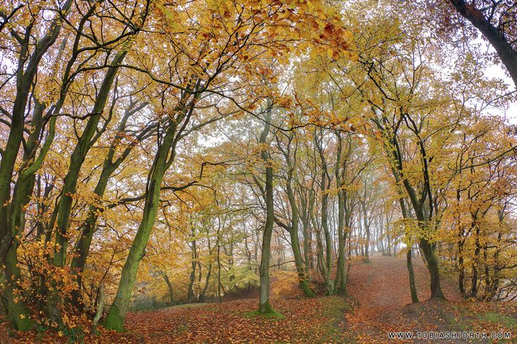 Autumn Colors 2 by tobias hjorth