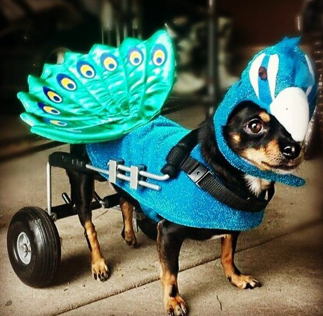25 Pet Halloween Costumes That Are So Cute We Can't Even
