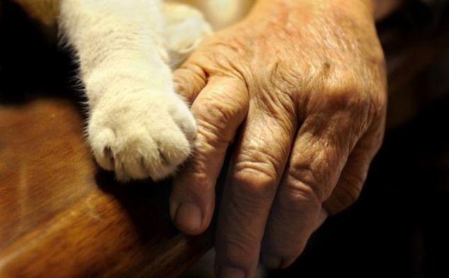 Gyertyagyújtás a megkínzott állatokért 23 városban + BP Hősök tere