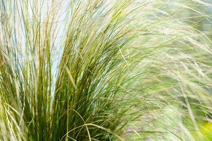 Nine Plants For Windy Gardens Balcony Plants Garden