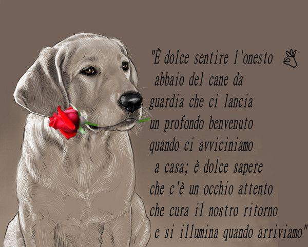 Frasi Per Cani.Le Piu Belle Migliori Frasi Sui Cani Citazioni Sui Cani Cani Humor Sui Cani