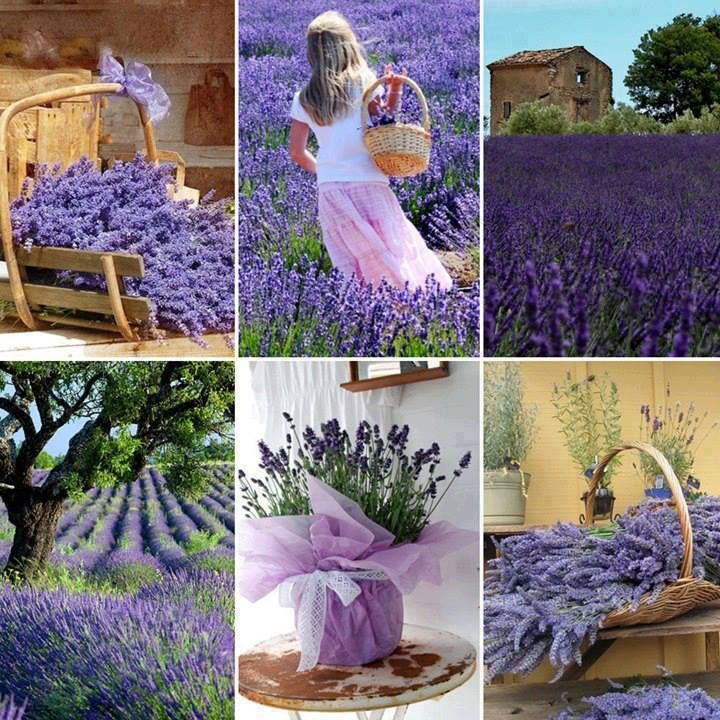 Bildergebnis für lavender moodboard