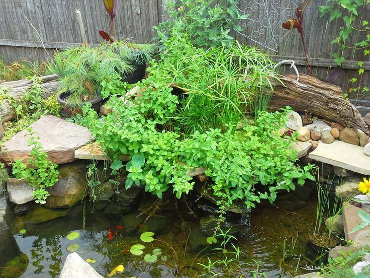98 best pond bog filter ideas and designs images on pinterest for Pond shade ideas