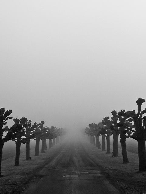 fog by KaireK..., via Flickr