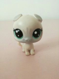 This is one of my lps  colection.His name is Snowflake