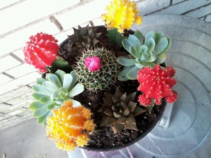 Mini Cactus Garden Home Decor Pinterest Gardens