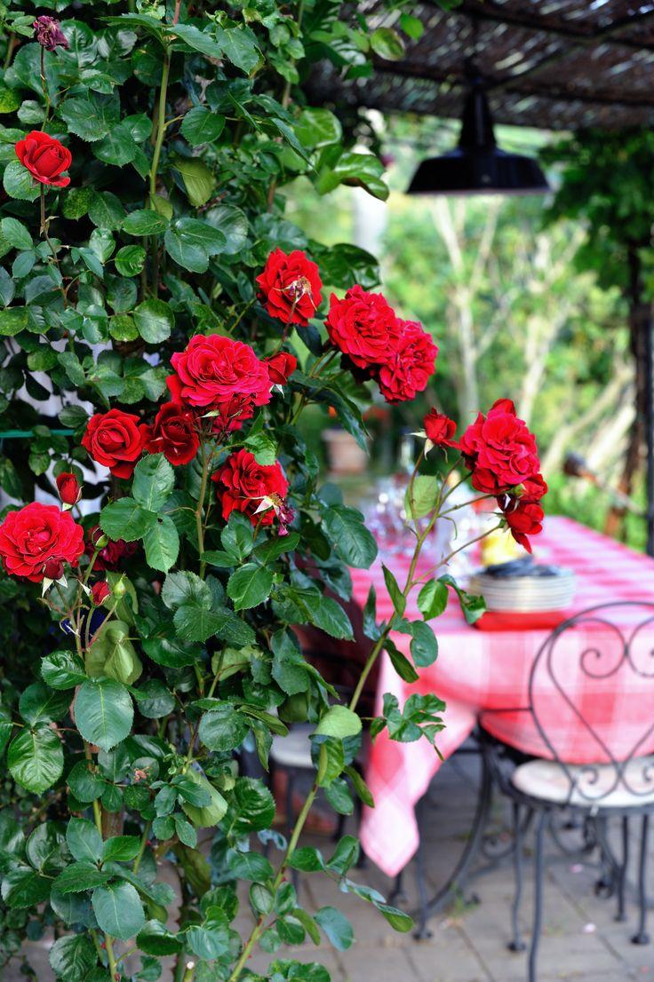 Pergola with Roses