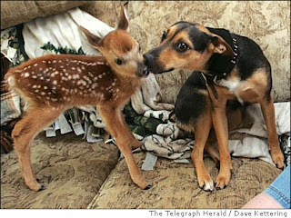 Image detail for -... caption dear lick a mountain feist named candy kisses kelsey a