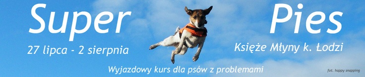 $300 Dog training course for fearful, reactive and aggressive dogs (Poland)