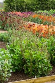 HOW TO; LAY OUT A VEGETABLE GARDEN