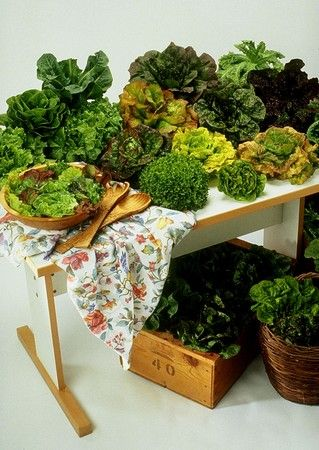 Vegetable Gardening Tips On The Ideal Ph Levels For 400 x 300