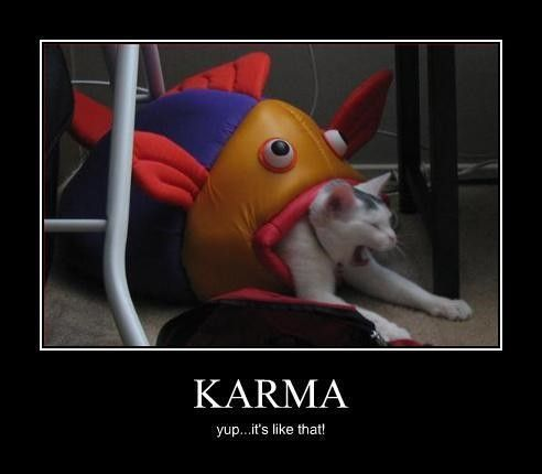 Karma...Karma...KarmaKarma, Cat Face, Funny Cat, Quote, Fish, Funny Stuff, Funny Animal, Funnystuff, Kitty