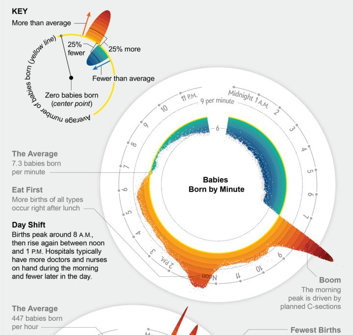 When babies are born the cycle by Nathan Yau #datavis #visualization