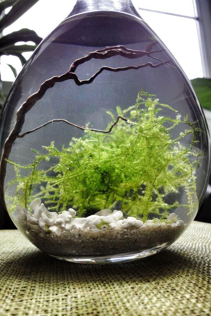 Moss water terrarium - this is beautiful