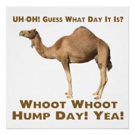 humpday camel | hump day camel