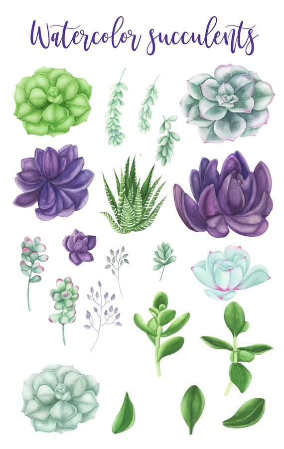 Aquarelle Plantes Grasses Clipart Clipart De Mariage Floral