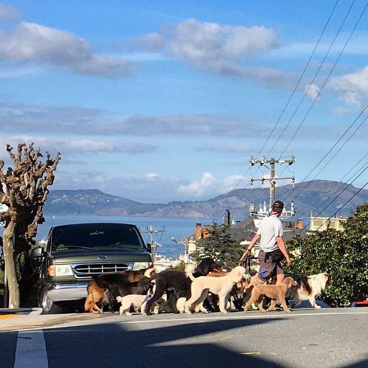 Walkies! #SF #dogwalker #wolfpack #pacheights #dogsofinstagram
