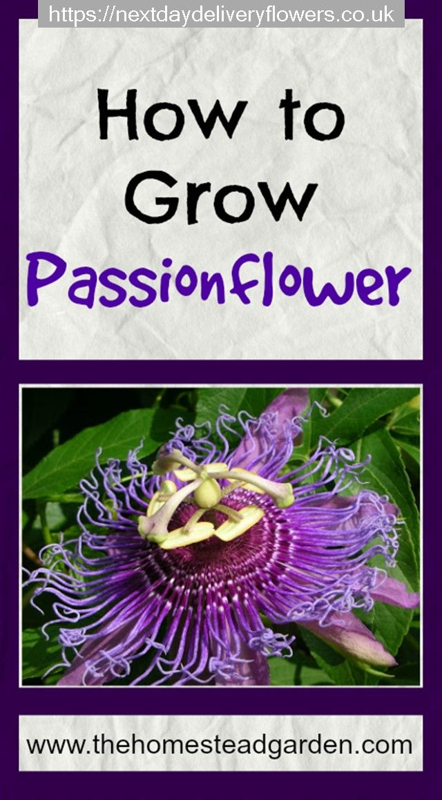 Pin By Steve Dodson On Gardening Passion Flower Planting Flowers Homestead Gardens