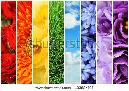 Collage of beautiful flowers, grass and sky