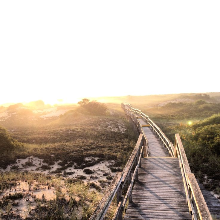 Plum Island Beach: 70 Best Plum Island Images On Pinterest