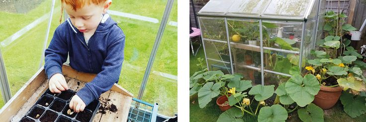 """""""We recently moved house and the first thing we did was plant our pumpkin seeds. We are trying to grow more things ourselves and aim towards self-sufficiency. Here is the resulting pumpkin plant!"""" Lewis Knight, Bicester Eco Town Project Manager"""
