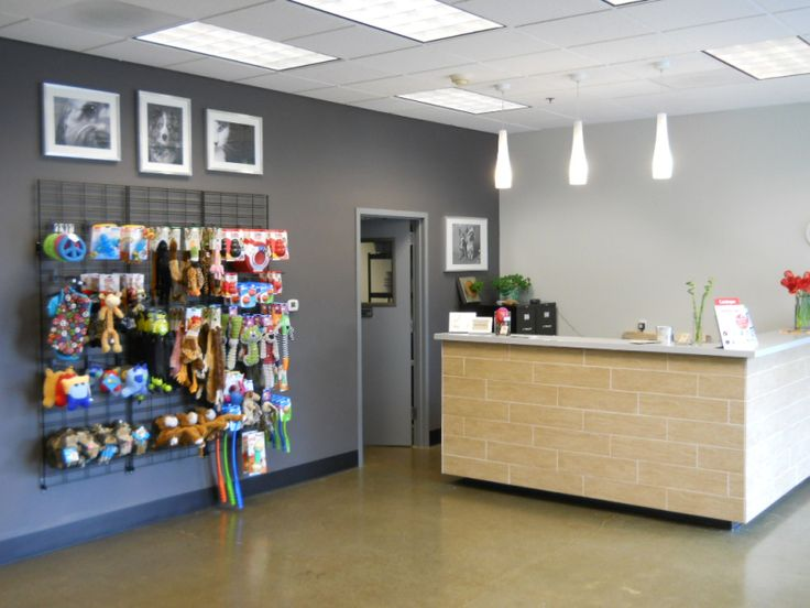 Doggie Daycare Lobby Doggie Daycare Design Rockville