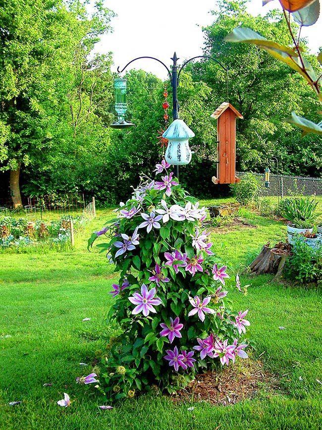 HappyModern.RU   Клематисы в ландшафтном дизайне (45 фото): роскошное украшение двора   http://happymodern.ru