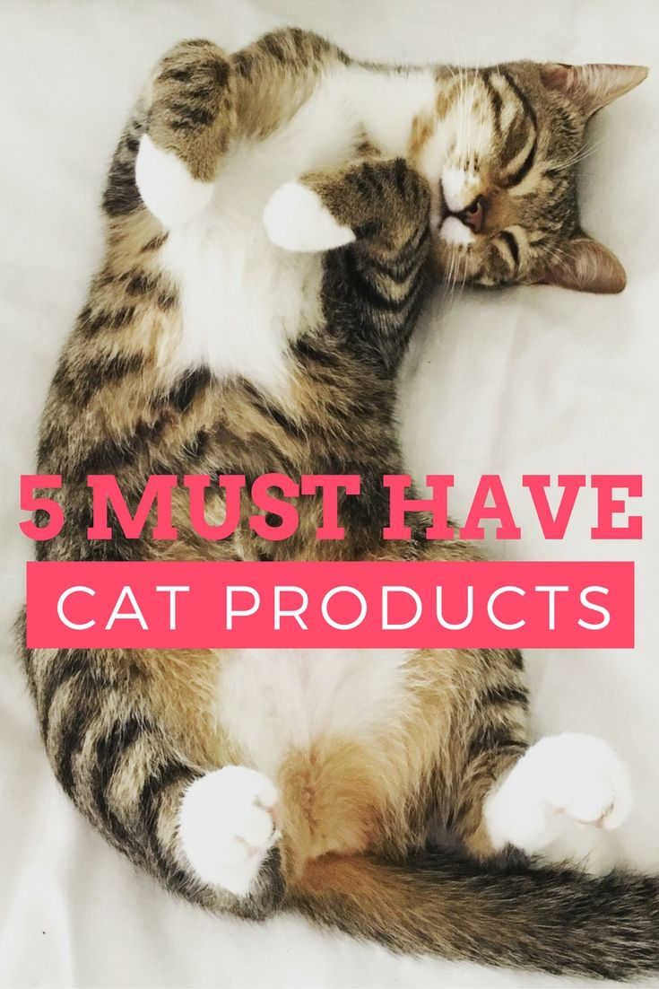 5 Cat Products you shouldn't live without! Kitty Parents this is a MUST READ! #cat