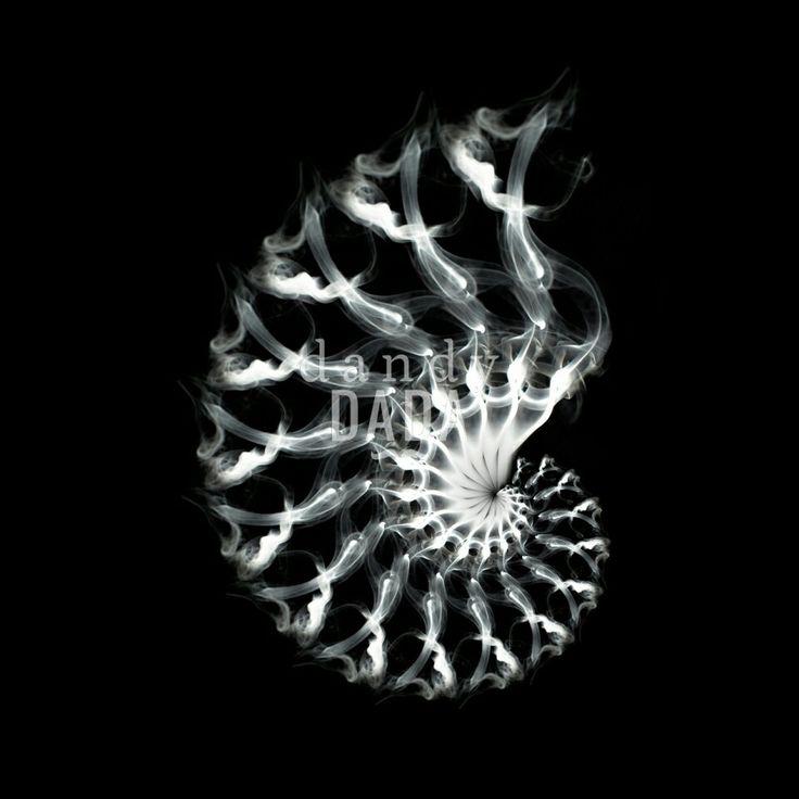 #Shell Strutture regolari e complesse si susseguono incessantemente in un #ritmo cadenzato contemporaneamente #concavo e #convesso, positivo e negativo. E' una ricerca armonica che si affida al calcolo #matematico e alla semanticità del suo linguaggio. #fotografia #fineart #conchiglia #natura #animali #arteastratta #linee #fumo #sigaretta