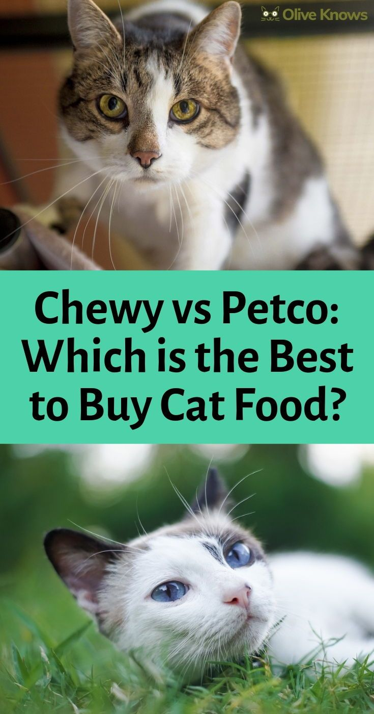 Chewy Vs Petco 2019 Which Is Best To Buy Cat Food Buy A Cat Cat Food Cats