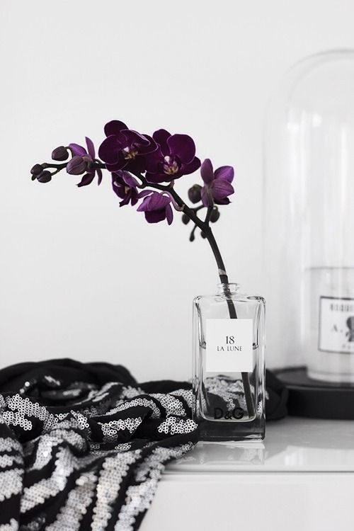 a simple dark purple orchid branch in a recycled perfume bottle