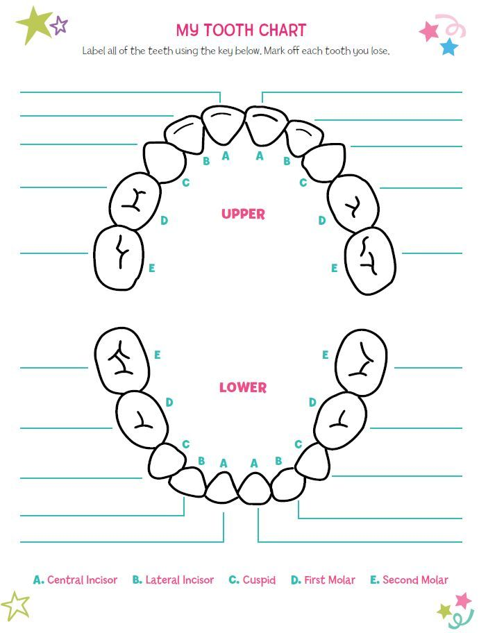 17 Best images about Tooth chart project on Pinterest | Keepsakes ...