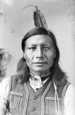 Timber Wolf, Dakota