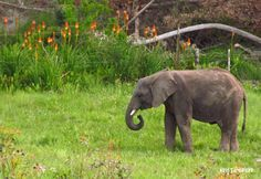 Knysna Elephant Park South Africa