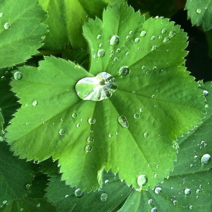 Waterdroplets on a leaf... Nature is beautiful!