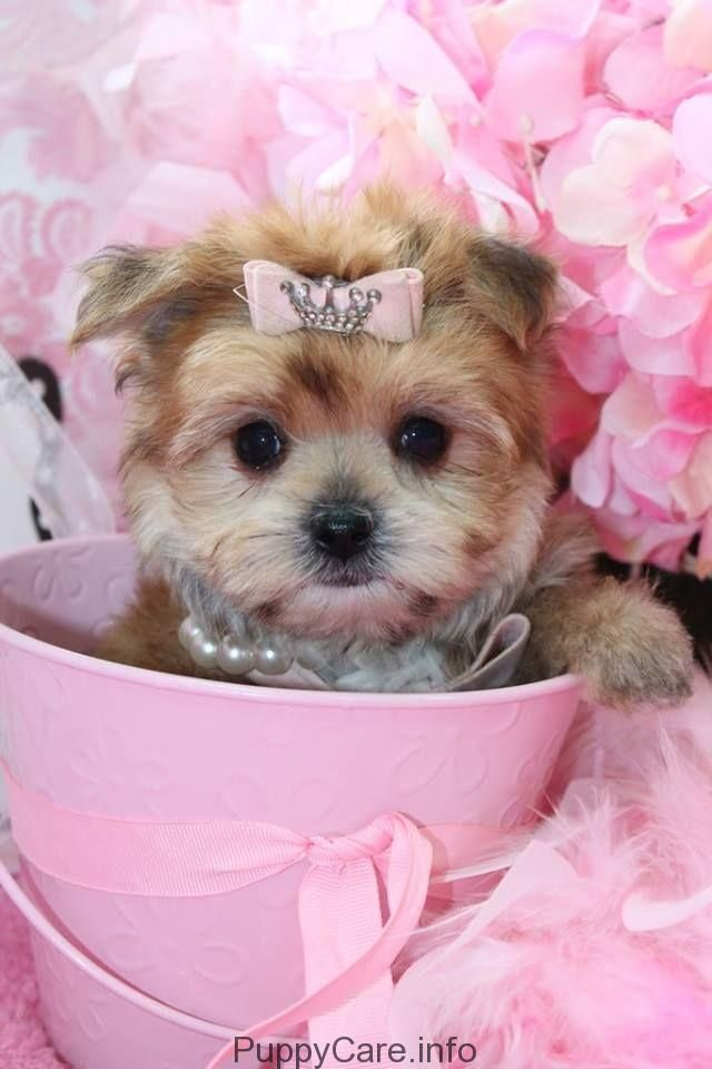 Cute Puppies You Ll Have To See 209 Who Does Not Love Puppies