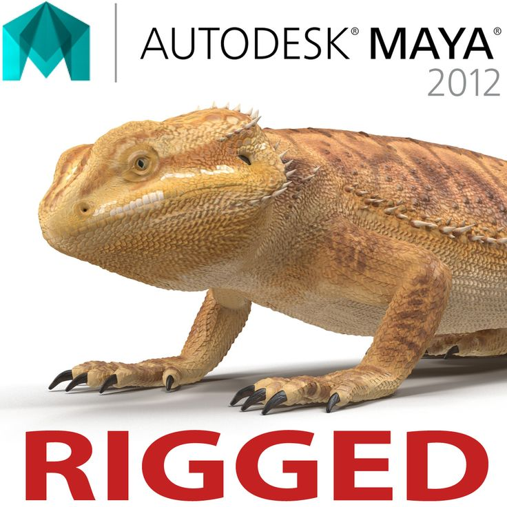 Bearded Dragon Rigged for Maya