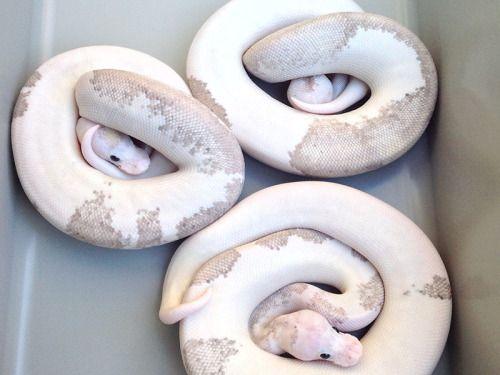 Best 25 Snake Terrarium Ideas On Pinterest Snake