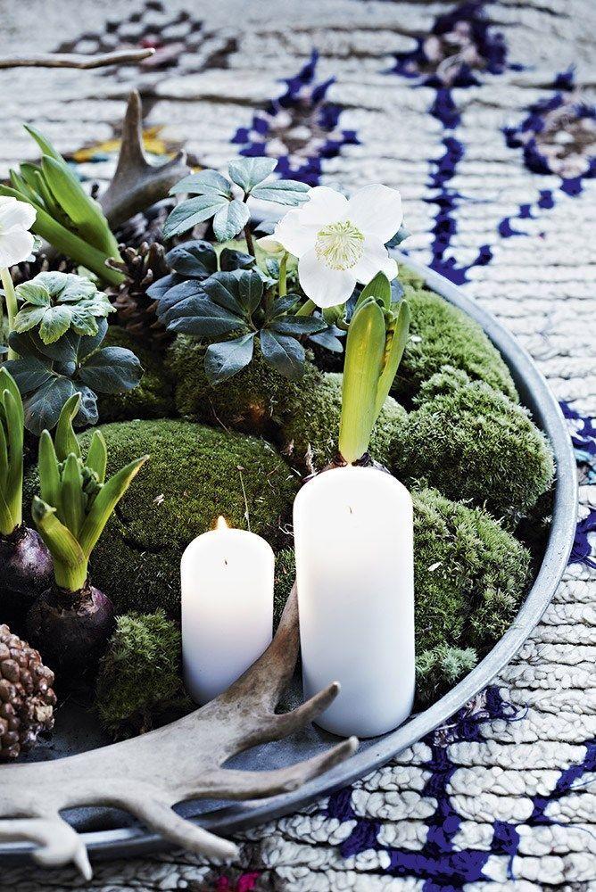 Les 25 meilleures id es concernant centres de table en for Plante rose de noel
